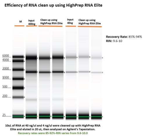 Efficiency of RNA Cleanup using HighPrep RNA Elite