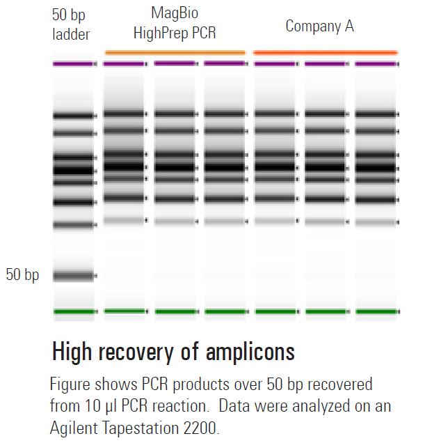 Efficient recovery of amplicons achieved with HighPrep™ PCR Clean-up System